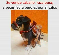 Se vende caballo pura raza. A veces ladra, pero es a causa del calor Bad Memes, Funny Memes, Jokes, Animals And Pets, Funny Animals, Cute Animals, Interesting Animals, Me Too Meme, Everything Funny
