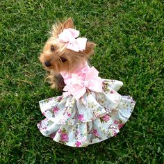 Meet Me in Paris Dog Dress Customizable to your dogs measurements!  Size  XXS XS Small by Rufflesforcharli on Etsy https://www.etsy.com/au/listing/216827584/meet-me-in-paris-dog-dress-customizable