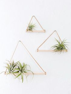 a simple decor idea - DIY @ Craft's Plant Wall, Plant Decor, Wall Plant Holder, Air Plants, Indoor Plants, Potted Plants, Hanging Plants, Air Plant Display, Decoration Plante