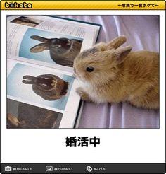 画像 Cute Baby Animals, Animals And Pets, Funny Animals, Healing Images, Illustrations And Posters, Mammals, Cute Cats, Rabbit, Funny Pictures