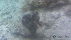 Zeepaardje gespot tijdens een duiktrip in Curacao. Wil je weten waar, kijk mijn blog Fish, Pets, Blog, Animals, Animales, Animaux, Pisces, Blogging, Animal