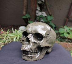 Life Sized Solid Concrete Dark Grey Skull with High Gloss Clear Lacquer Coating.