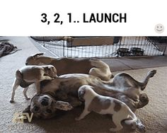 Launch / iFunny :)