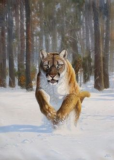 Puma Greeting Card by Roberto Bianchi Big Cats Art, Cat Art, Pumas, Wild Animals Photos, Animals And Pets, Wildlife Paintings, Animal Paintings, Hunting Art, Lion Art