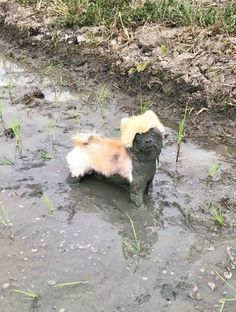 Why you should never let your dog play in the mud.