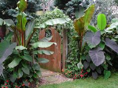 This is a tropical garden in MARYLAND! imagine! If you're interested in seeing more, youtube BocaJoe; it's awesome.