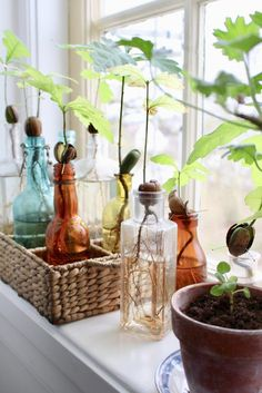 Find Out 10 Smart Ways To Grow Hydroponic Plant At Home # hydroponique Hydroponic Farming, Hydroponic Plants, Hydroponic Growing, Indoor Garden, Indoor Plants, Diy Jardim, Yucca, Plantas Bonsai, Decoration Plante