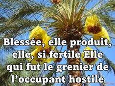 Nouveau texte publié sur le site littéraire Plume de PoèteCette terre nourricière -Brahim BOUMEDIEN-