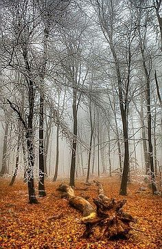 / Photo The End of Autumn by Béla Török Beautiful World, Beautiful Places, Walk In The Woods, Mother Nature, Natural Beauty, Pure Beauty, Places To See, Scenery, Images