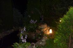 nocą w ogrodzie - 4 sierpień 2012