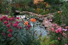 View of the pond in August. From left to right: Bee Balm , Tiger Lily, Blue Delphiniums gone to seed, part of my Tiger Eye Sumac and a Betty Prior Rose bush. #gardenpond #tigerlilies