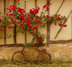 The old bike in the courtyard of our vacation rental in Gascony.