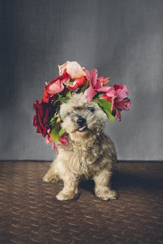 Flower crowns for dogs ⎟ I Heart Weddings and Flower Talk ⎟ see more on: http://burnettsboards.com/2015/10/dogs-flower-crowns/
