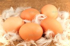Realistic Graphic DOWNLOAD (.ai, .psd) :: http://jquery.re/pinterest-itmid-1006822693i.html ... Eggs on the white feathers ...  breakfast, burlap, chicken, cholesterol, close up, cooking, cuisine, domestic, egg, farm, feather, food, fresh, groceries, hen, ingredient, kitchen, market, meal, pile, rustic, smooth, snack, wooden  ... Realistic Photo Graphic Print Obejct Business Web Elements Illustration Design Templates ... DOWNLOAD :: http://jquery.re/pinterest-itmid-1006822693i.html