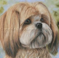 Lhasa Apso Haircuts Dog Breeds Index | Dog Breeds Picture