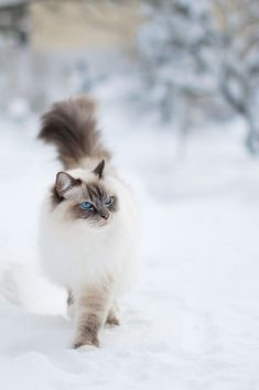 simply-beautiful-world earthandanimals: Snow King Photo by Milla Peltoniemi