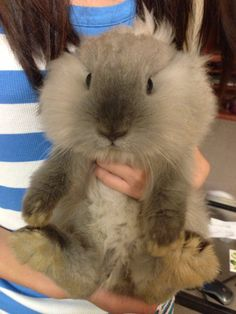 I'm in love! Fluffiest bunny everrrrrr!