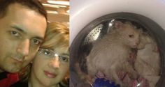 petition signatures for Punish Argentinian woman that placed cat into washing machine just for fun! Cane Corso, Sphynx, Chinchilla, Rottweiler, Pitbull, Evil People, Stupid People, Stop Animal Cruelty, Animal Welfare