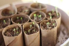 An easy way to start your seeds indoors is to use toilet paper or paper towel rolls. There are two advantages of using toilet paper rolls. Starting A Garden, Seed Starting, Permaculture, Vegetable Garden, Garden Plants, Herb Garden, Garden Kids, Garden Soil, Toilet Paper Roll Crafts