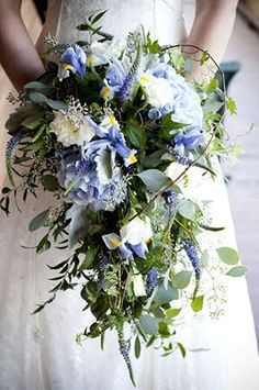 My bouquet had blue irises white lisianthus purple veronica lavender hydrangea seeded eucalyptus dusty miller and ivy Iris Bouquet, Hydrangea Bridal Bouquet, Cascading Wedding Bouquets, Bright Wedding Flowers, Romantic Wedding Flowers, Cheap Wedding Flowers, Blue Wedding, Trailing Bouquet, Lavender Bouquet