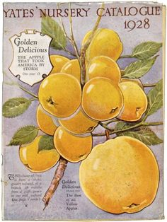 "Yates catalogue 1928 showing ""Golden Delicious"" - 'The apple that took America by storm' (a tasteless apple! Garden Catalogs, Seed Catalogs, Seed Illustration, Botanical Illustration, Golden Delicious Apple, Wild Flower Meadow, Vintage Seed Packets, Sprouting Seeds, Seed Packaging"