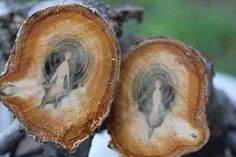 """""""Tree spirits. All trees have spirits but all trees obviously don't have patterns such as these. I think somebody was trapped in that tree."""""""
