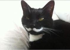 Animals Celebrating Movember