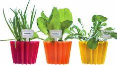 Três sugestões para montar a sua horta - Casa