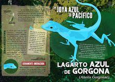 Resultado de imagen para lagarto azul gorgona