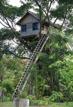 Since people started building structures with a roof and four walls for themselves and their family, one of the oldest materials used since the birth of architecture today is wood. Beautiful Tree Houses, Cool Tree Houses, Fairy Houses, Play Houses, Architecture Today, Architecture Details, Luxury Tree Houses, Tree House Plans, Woodland House
