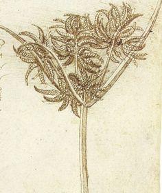 leonardo+da+vinci+paintings | Sedge.jpg - Leonardo da Vinci - WikiPaintings.org