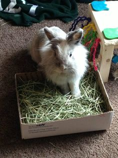 A bunny and his hay:)