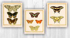 Decorative arts Nursery decor Butterflies print by PrintCorner