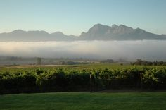 Mists over Fairview vineyards, Paarl, at harvest time Drinking Around The World, Wine Guide, Wine Country, Small Towns, Touring, South Africa, Vineyard, Beautiful Places, Around The Worlds