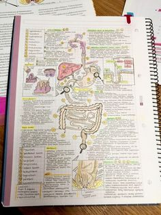 ideas for medical notes doctors med student College Notes, School Notes, Med School, College Tips, Medicine Notes, Science Notes, Study Organization, School Study Tips, Pretty Notes