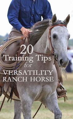 AQHA: 20 Training Tips for Versatility Ranch Horse