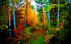 Forest Trail wallpaper free