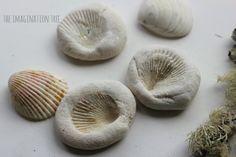 Shell imprint fossils