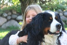 Isabel and our Berner Sennen