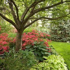 other plants to go with the azaleas.  azaleas under tree
