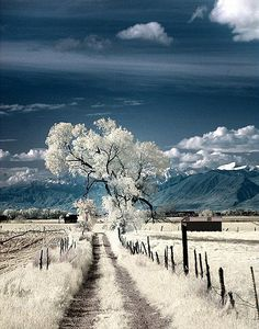 https://flic.kr/p/54eY7d | Utah landscape in infrared. | Taken with a full-spectrum-modified Canon Rebel XT with a MaxMax X-Nite XDP filter.  This shot was hand-held, and shot with a reasonably shallow depth-of-field.  Basically, it's crap.  For one reason or another, I shot this in .JPG, as well.  As such, the amount of actual processing that I could do without baking the image quality was minimal.  By the same, having shot this with a Rebel as opposed to my IR 5D, well, the IQ doesn't…
