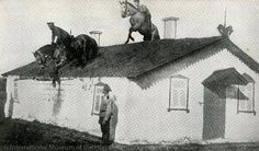 Just riding a horse over a house.