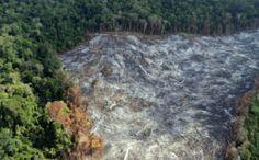 Pregopontocom @ Tudo: Desmatamento  tem redução de alertas em 19% na Ama...  Fiscalização foi ampliada e dados foram registrados por sistema em tempo real Redução foi mensurada entre agosto de 2013 e janeiro de 2014, comparado ao mesmo período 2012/2013.