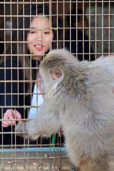 Primates, Kyoto, Voyage Nepal, Monkey Park, Animals, Timber Deck, The Visitors, Sunrise, Animales