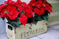 Here's a quick idea to decorate your Christmas porch or hallway! Find an old container and paint, stain or decoupage it to look vintage and in colours to suit your decor, then pile it full of poinsettias. So pretty!