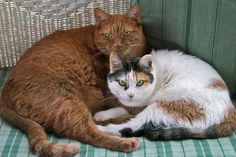 Cat owners are 40% less likely to have a heart attack according to this article