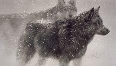 Robert Bateman - Paintings - Lithograph Wolf Pair In Winter