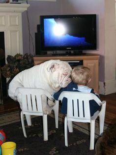 Bulldogs and Babies « BaggyBulldogs  So want a collection of bulldogs to raise with my baby! Too cute...