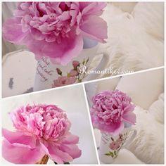 Şakayık çiçeği Romantik şakayık