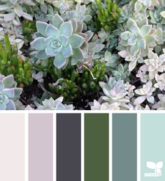 Design Seeds celebrate colors found in nature and the aesthetic of purposeful living. Colour Pallette, Color Palate, Colour Schemes, Color Combos, Color Patterns, Cactus E Suculentas, Design Seeds, Color Stories, Color Swatches
